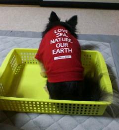 反省犬?!